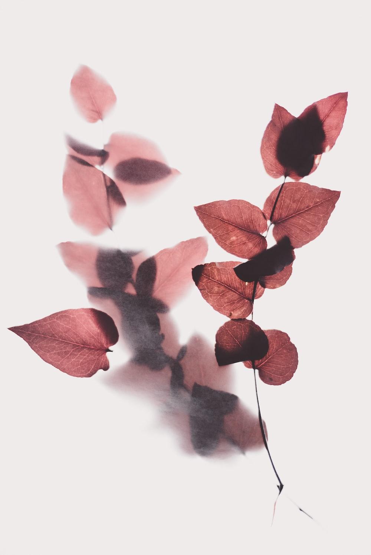 коричневый лист