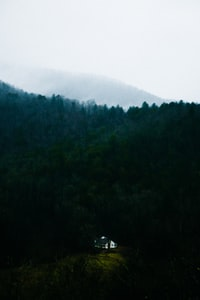 cabin near trees during day