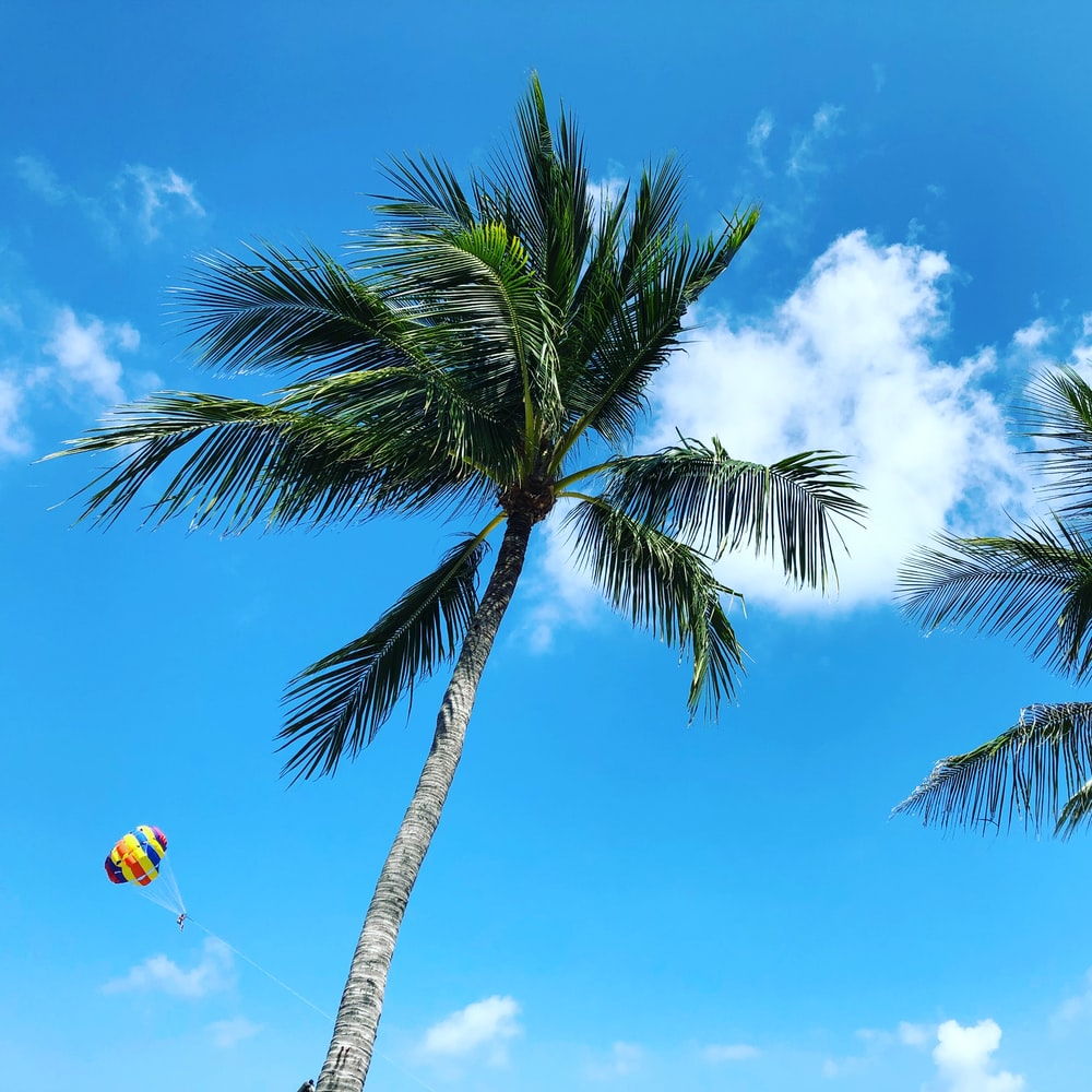 low angle photo of palm tree under blue sky and white clouds during daytime