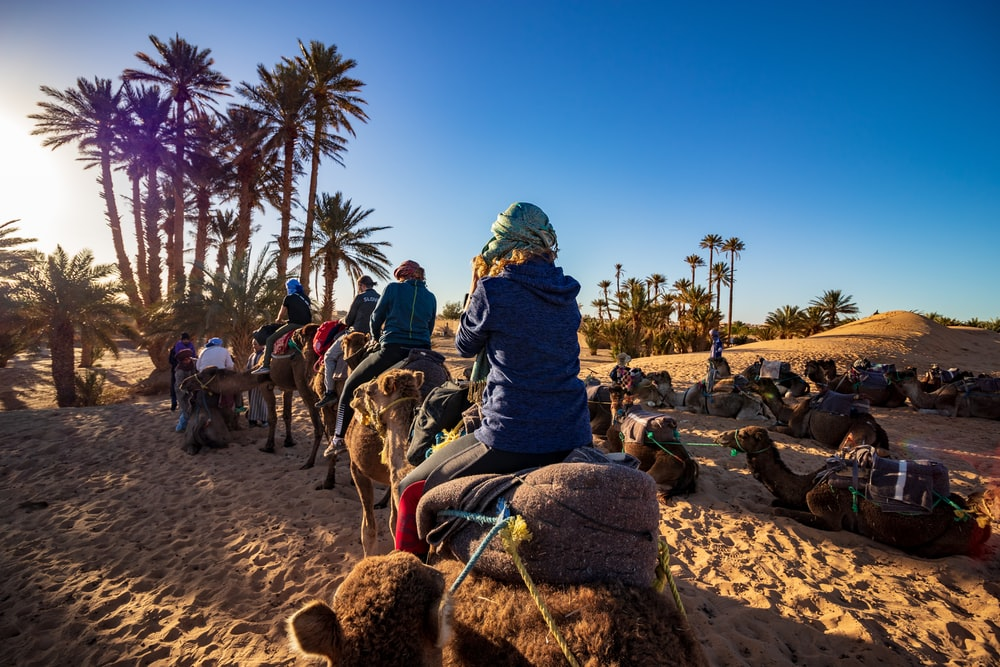 four person ride on camel