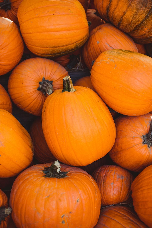 pile of orange pumpkin