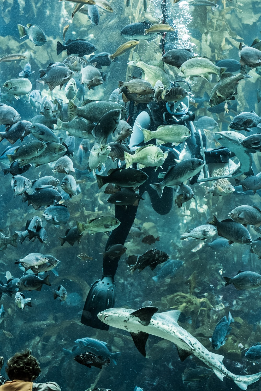 Underwater photo of diver with school of fish