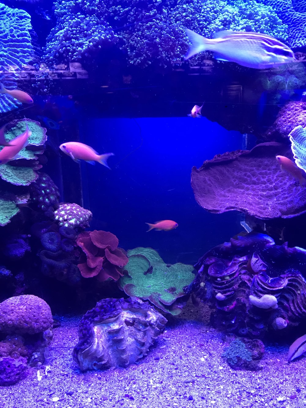 school of fish underwater photography