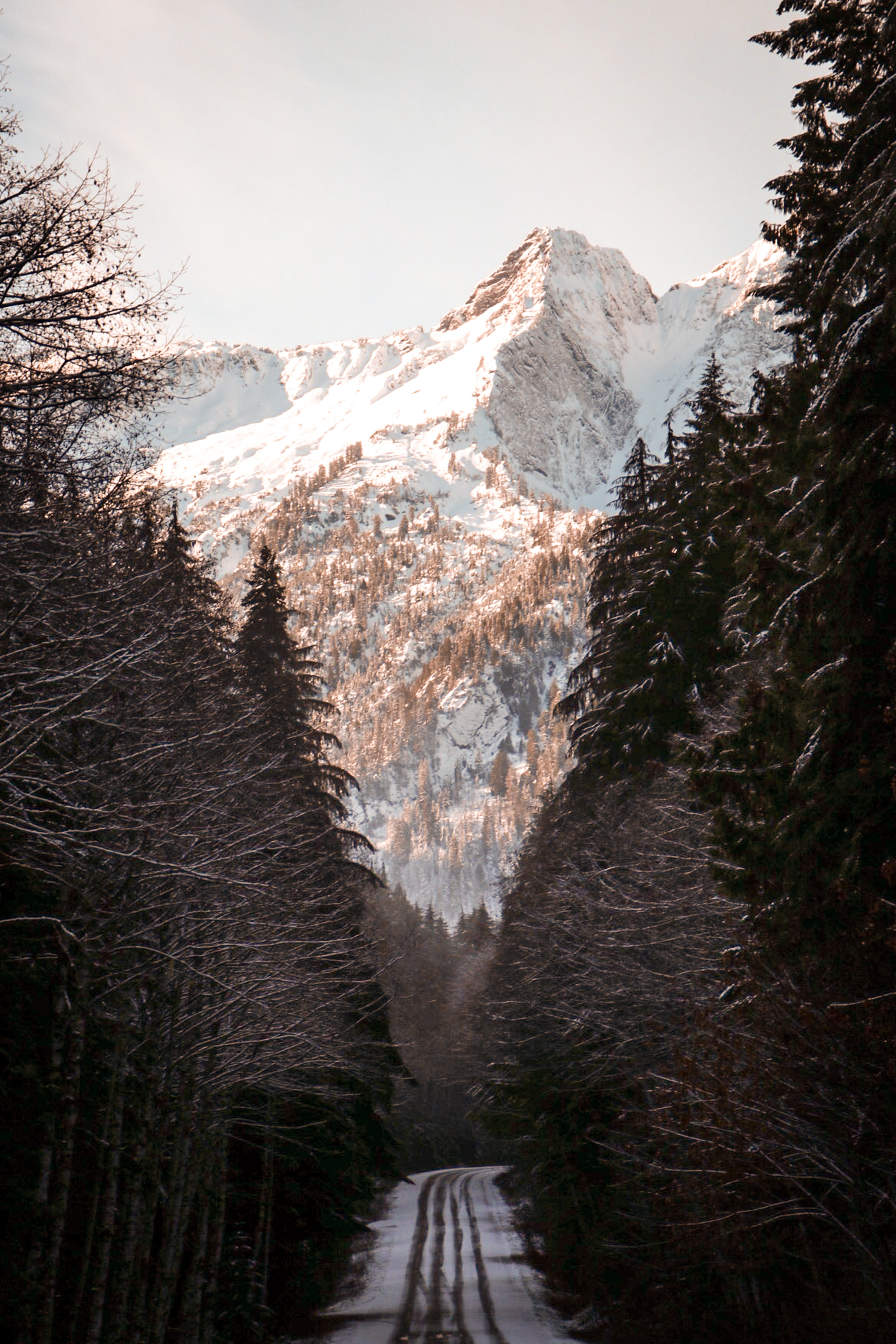 mountain surrounded by trees