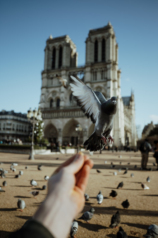 shallow focus of gray pigeon