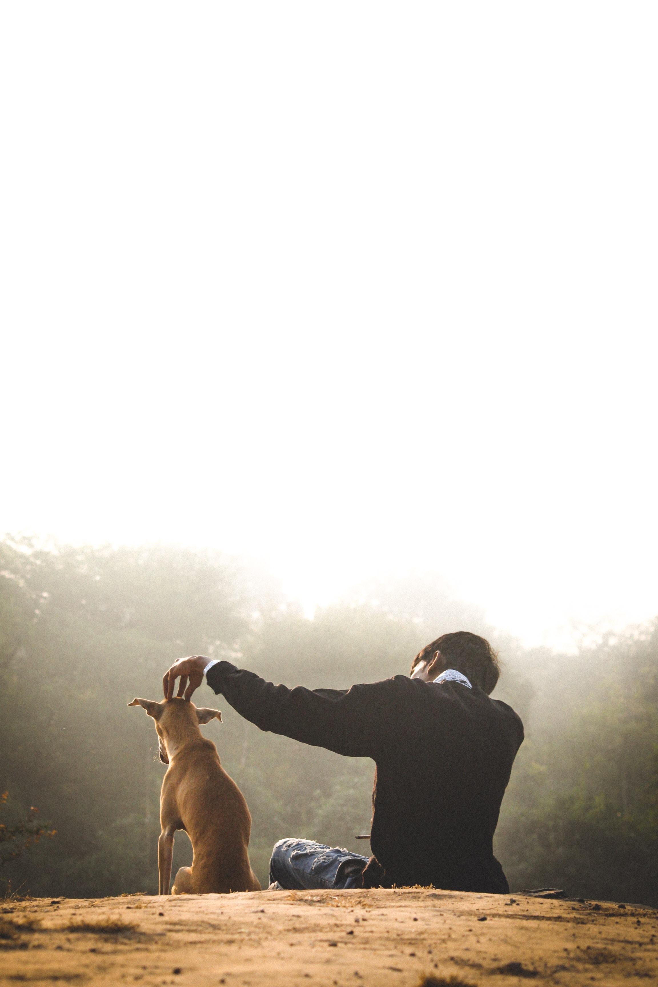 man sitting beside brown dog during daytime
