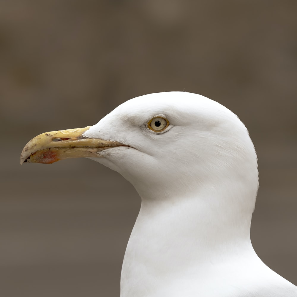 white bird in close-up photography