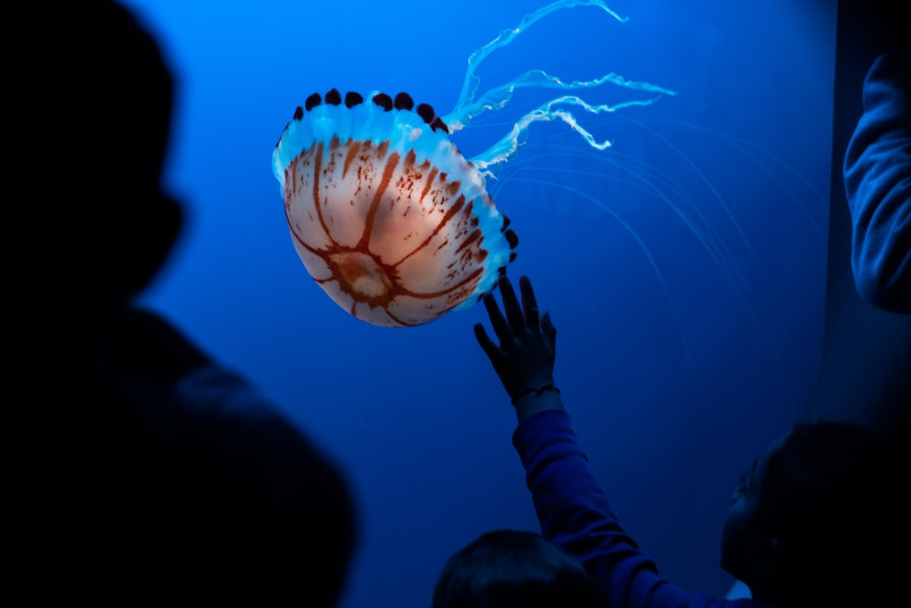 woman about to catch jellyfish in aquarium