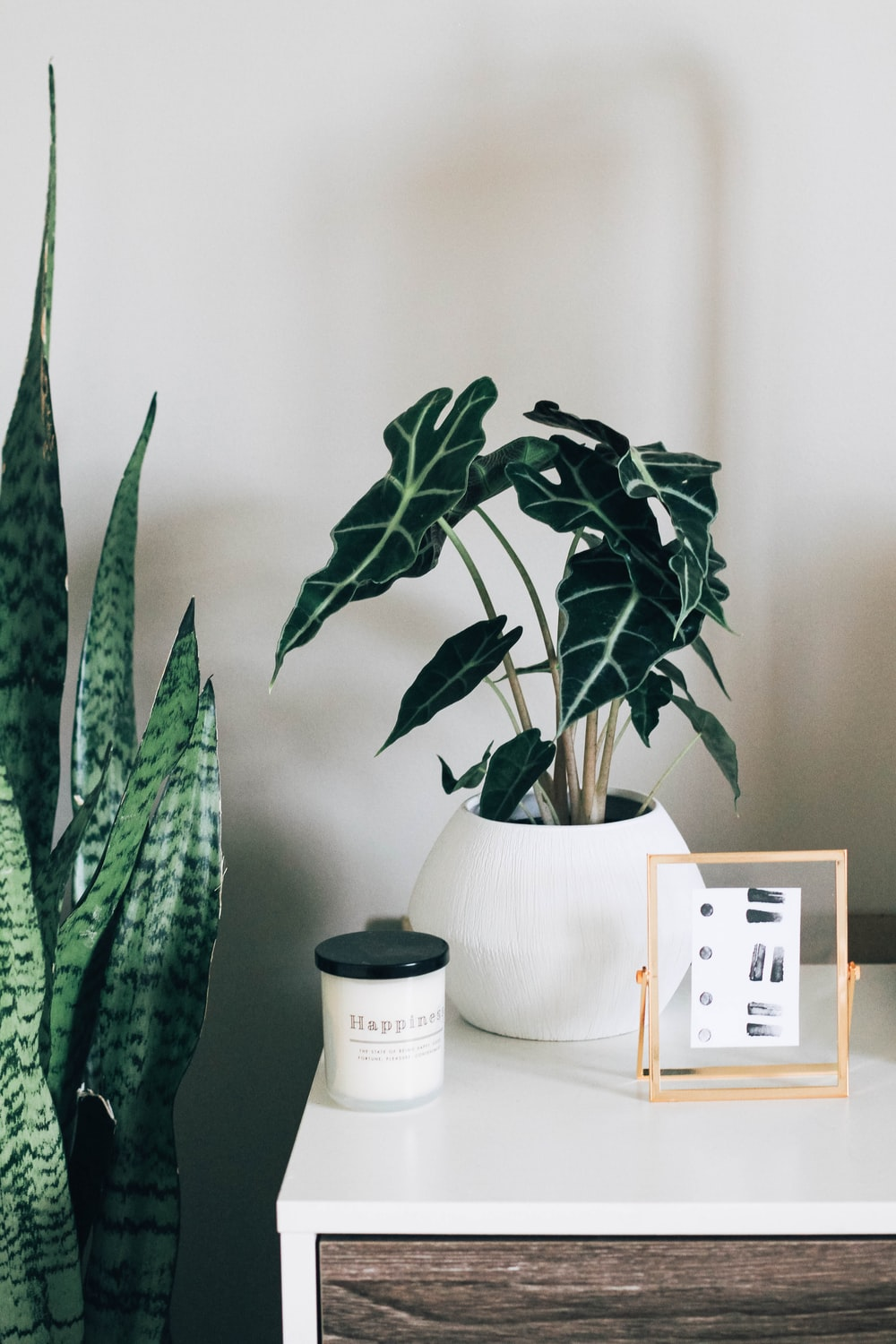 green indoor plant with white pot on white and brown wooden table