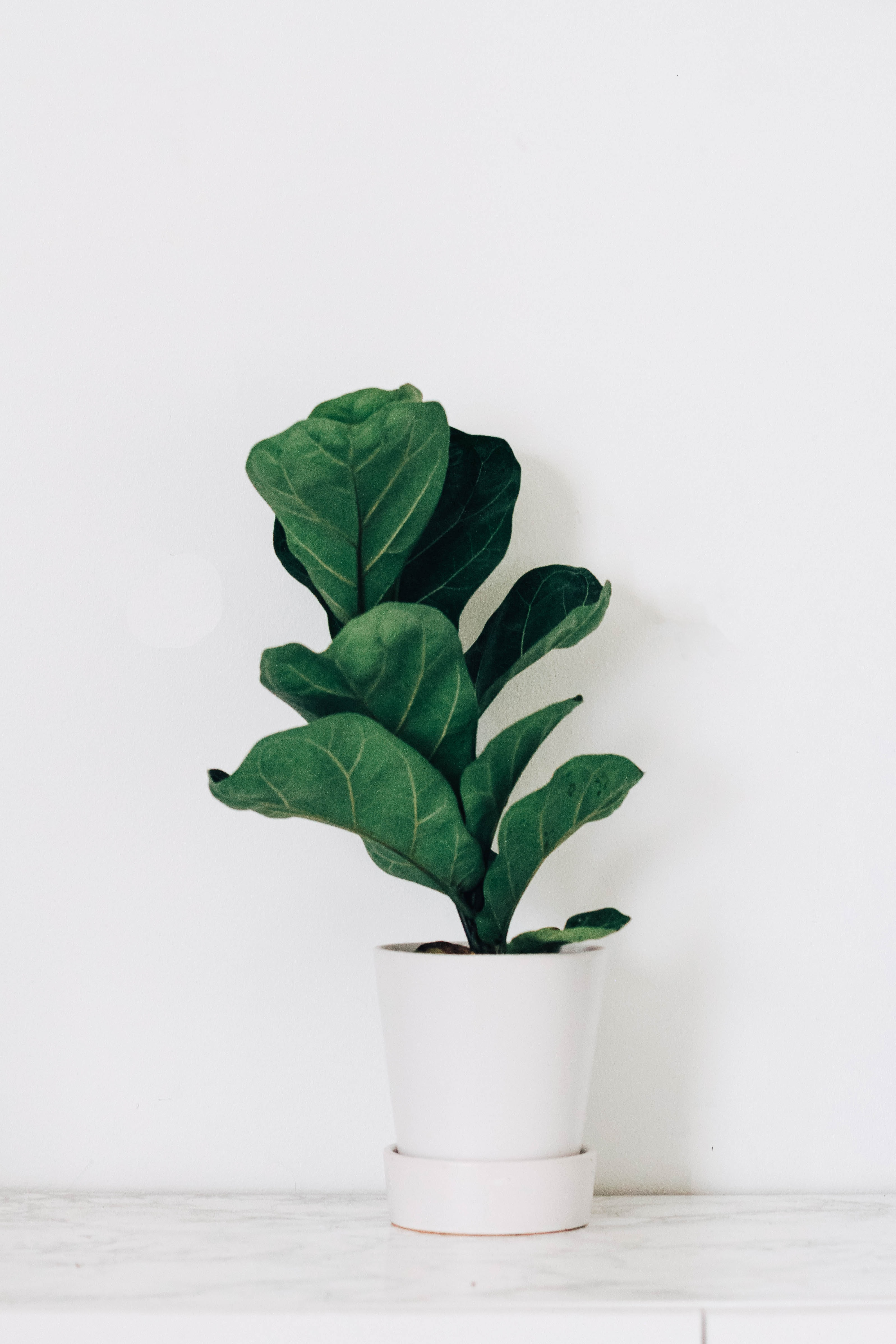 green leaf plant in white ceramic pot