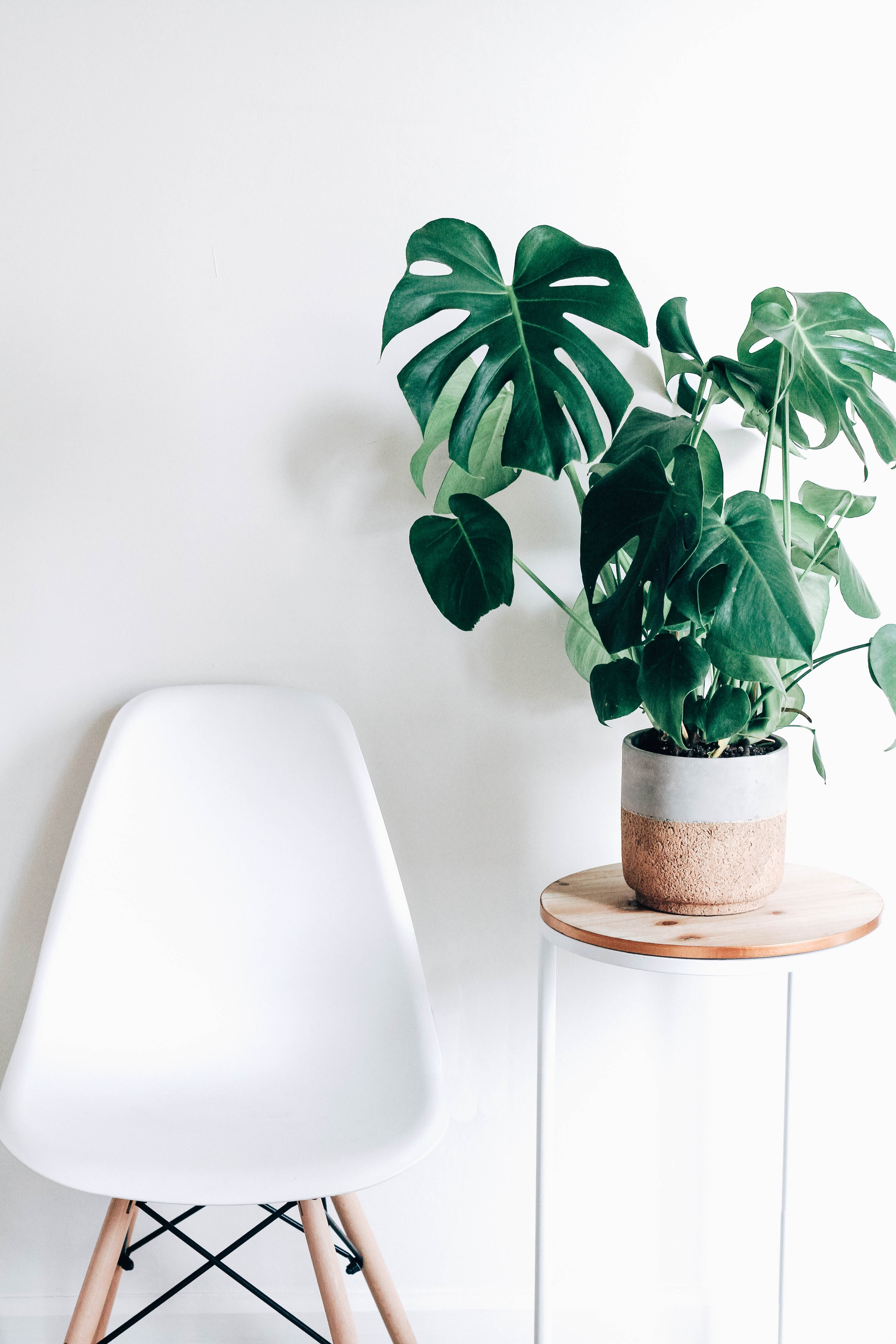 green plant in white ceramic pot