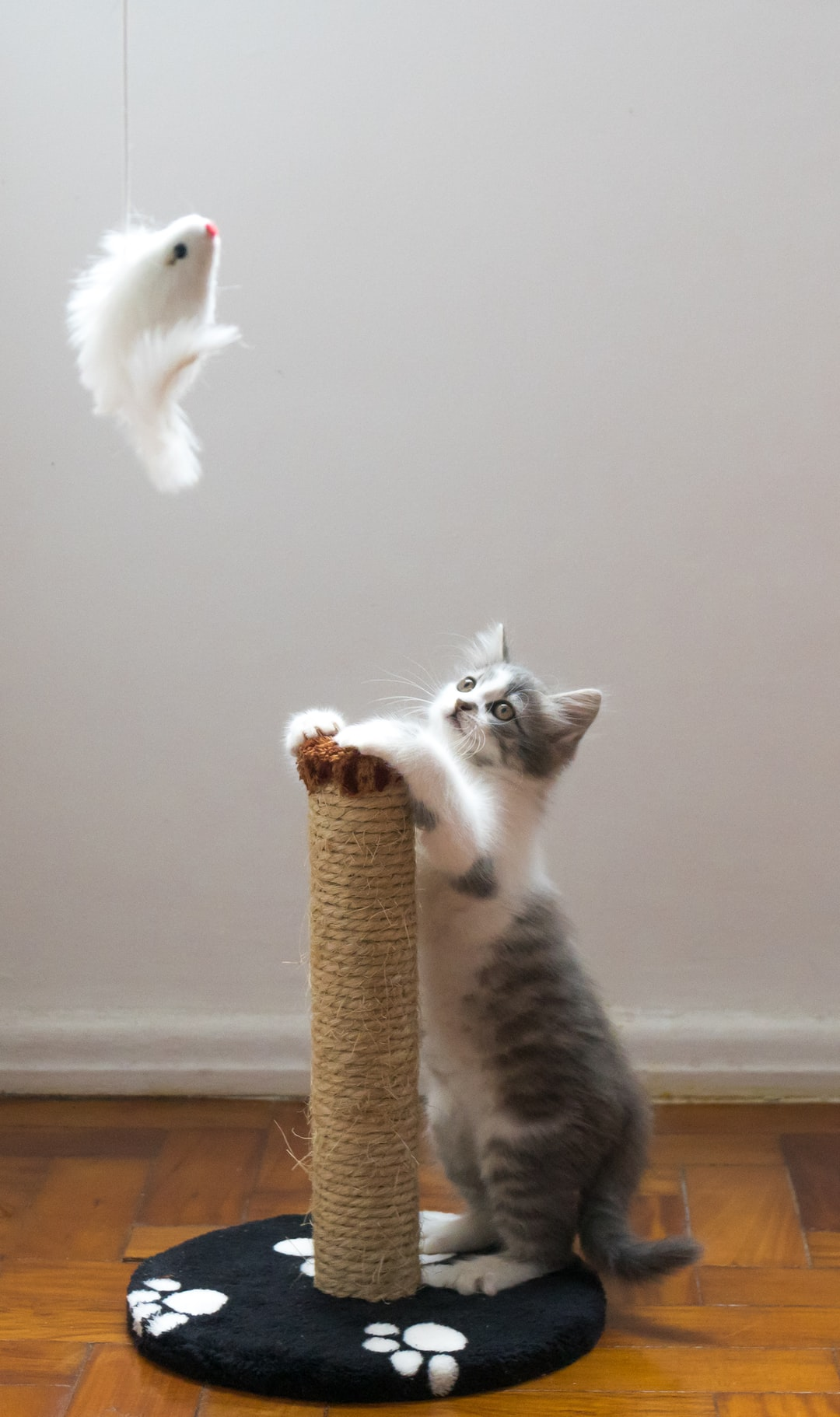 Cat Training School | I'll Wait While You Stop Laughing