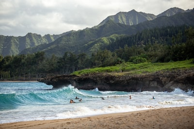 people swimming near shore with waves during daytime hawaii zoom background