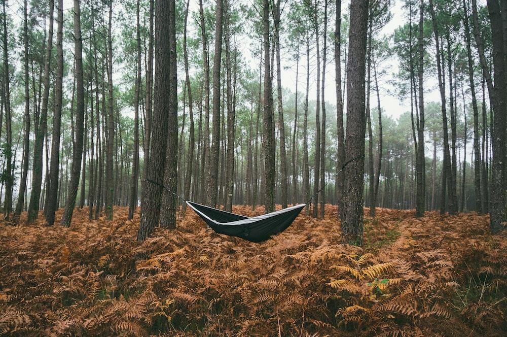 black hammock under green trees