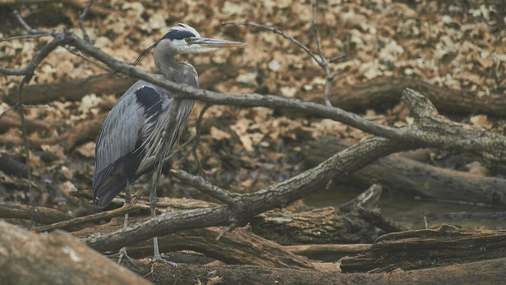 gray bird on brown logs