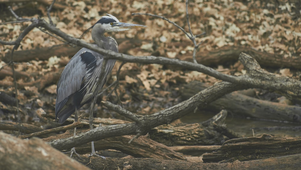 gray bird on brown logs