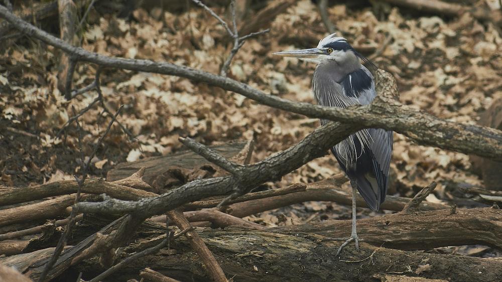 grey kingfisher bird perching on wood twigs