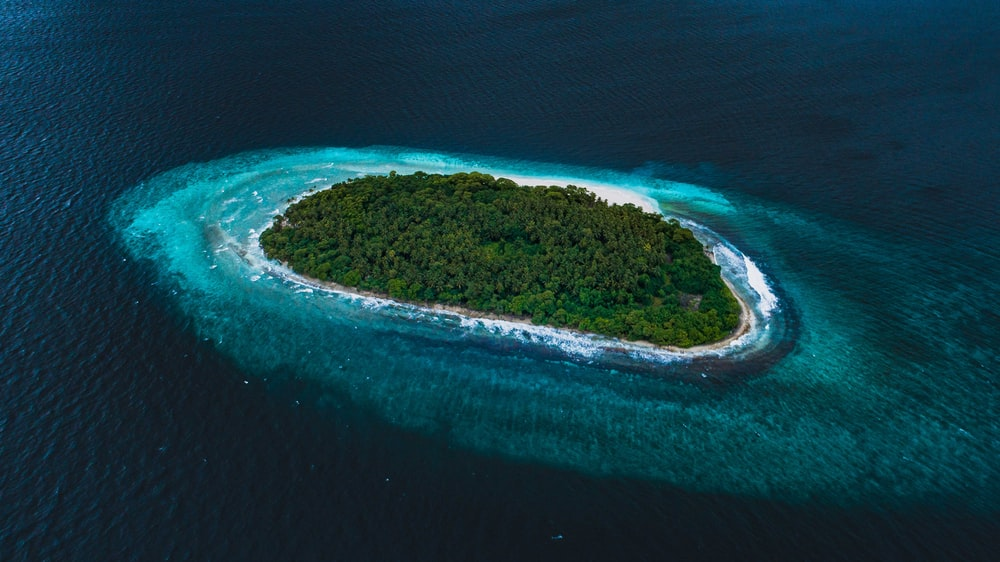 green trees covered island