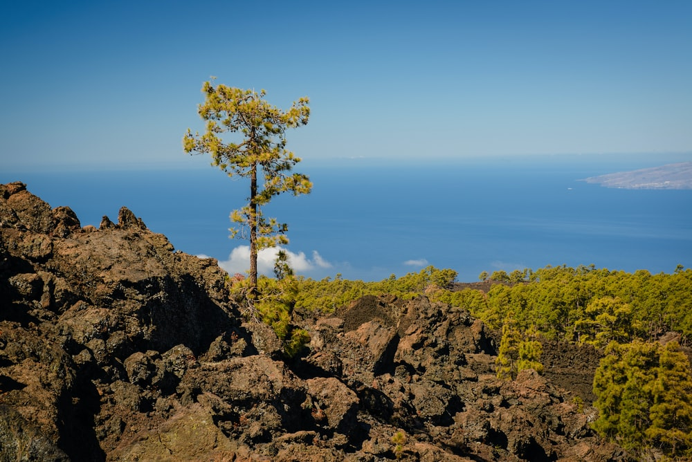 green tree under white sky tenerife isole canarie covid