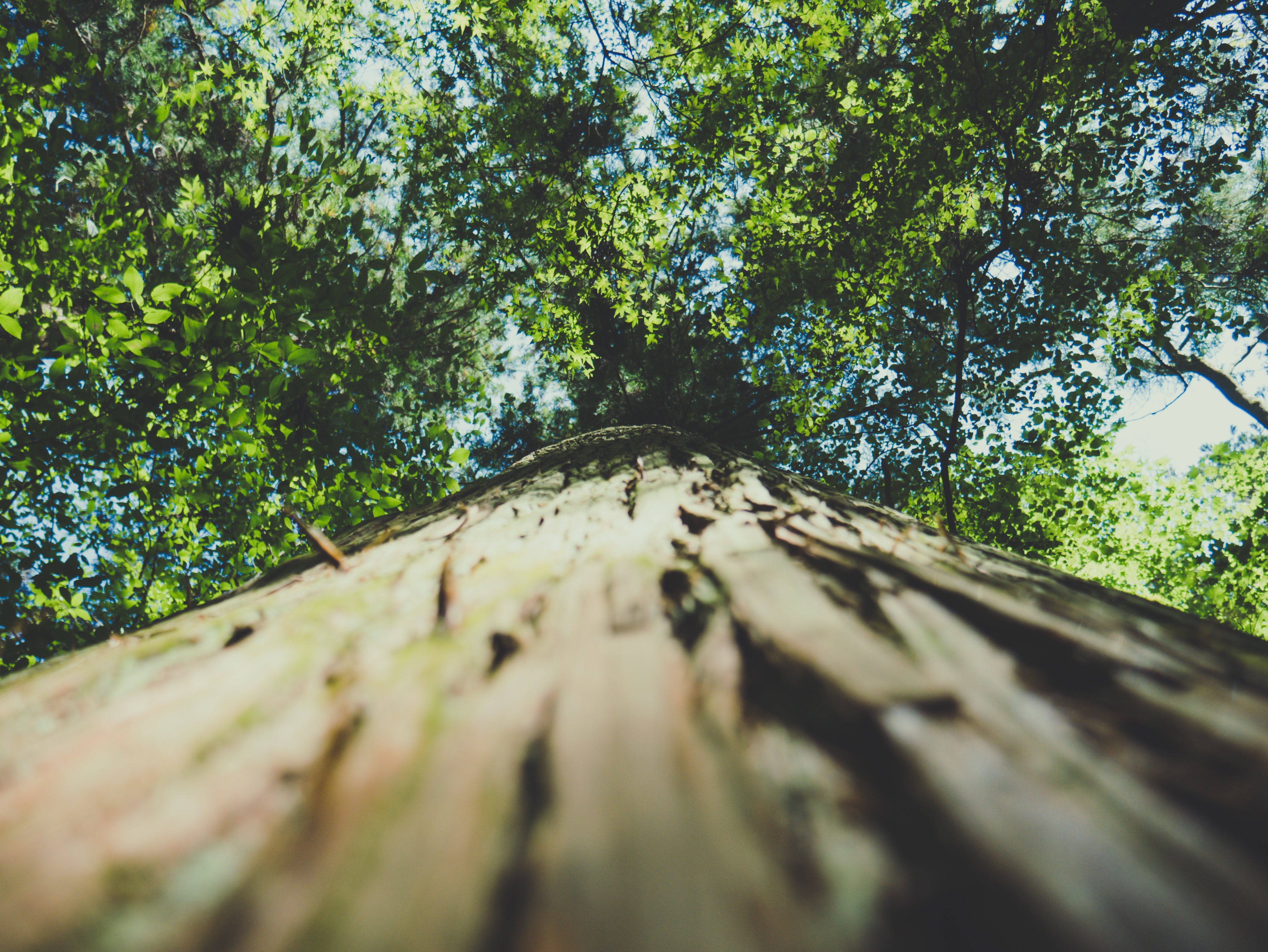 low-angle photography of tree during daytime