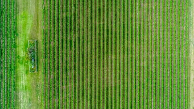 aerial photography of green fields st. paddy's day zoom background