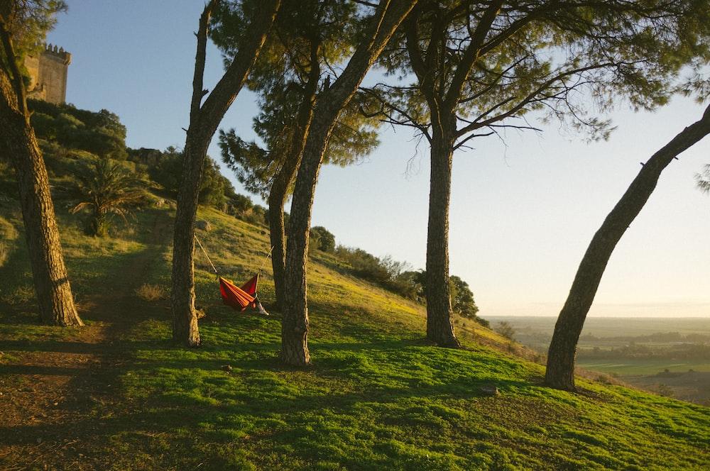 red hammock on green trees