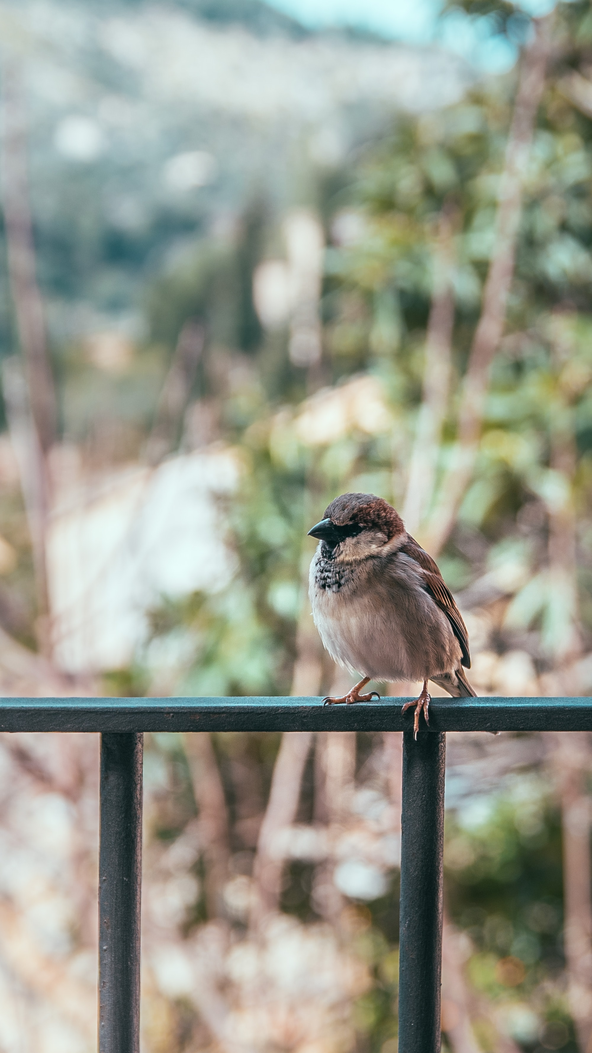 brown bird perching on fence