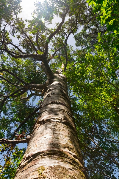 low-angle photography of green-leafed tree