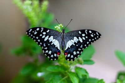 shallow focus photo of black and white butterfly