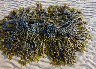green and gray seaweeds