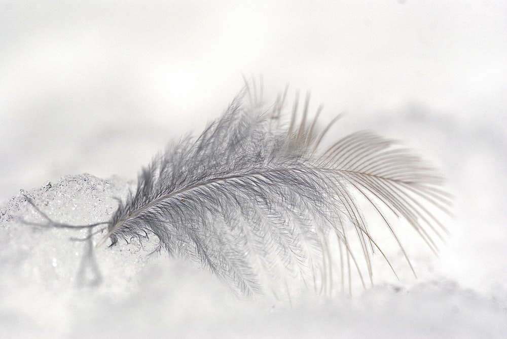 close-up photo of white feather