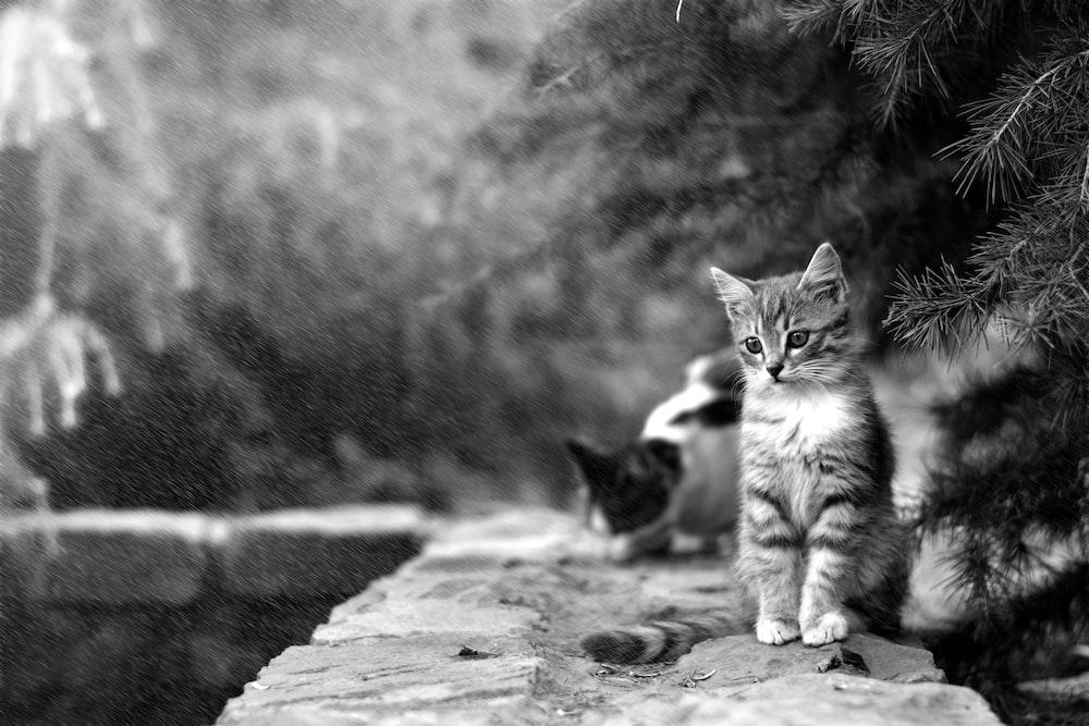 grayscale photo of kitten