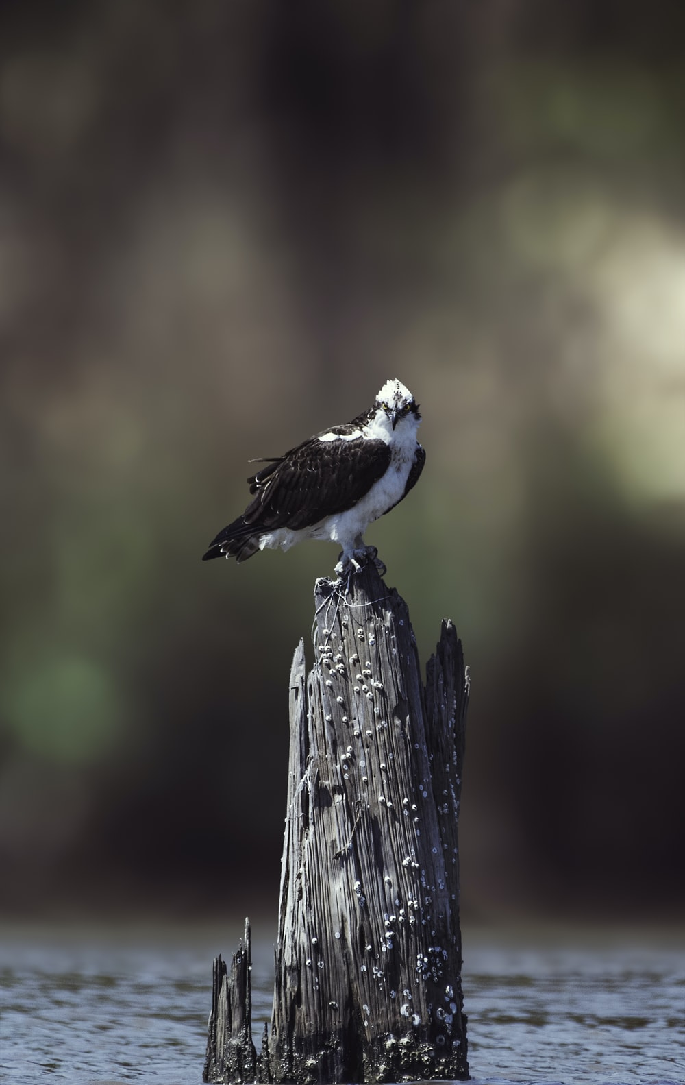 selective focus photography of white and black bird on brown slab surrounded body of water