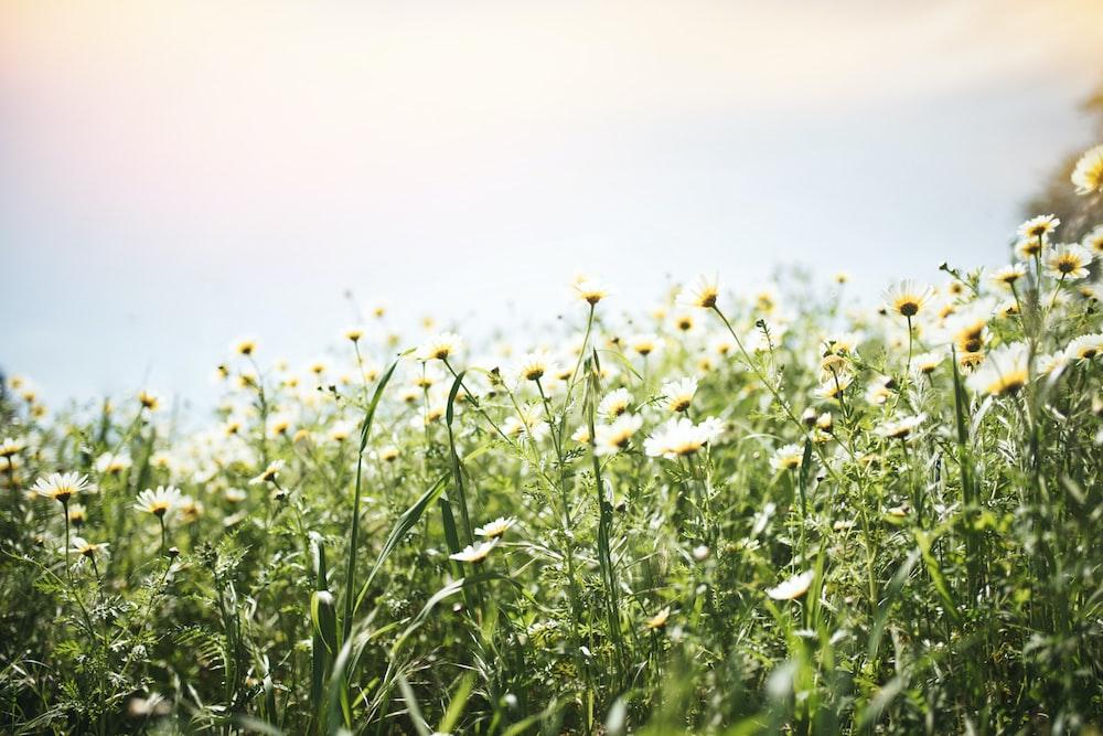 assorted-color petaled-flower field