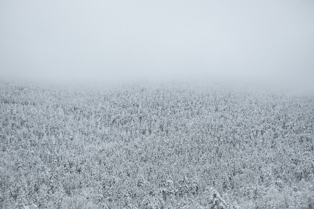 snow covered grass field