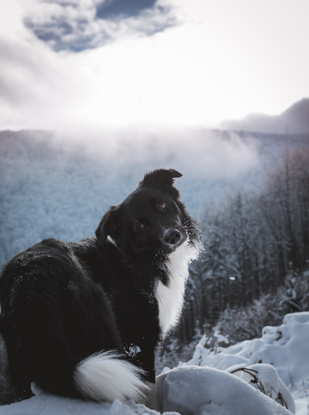 black and white dog standing on snow field