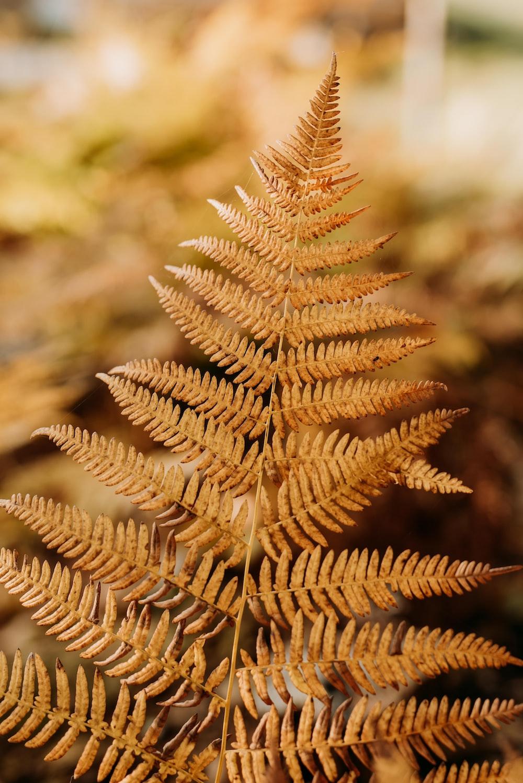 brown fern leaf