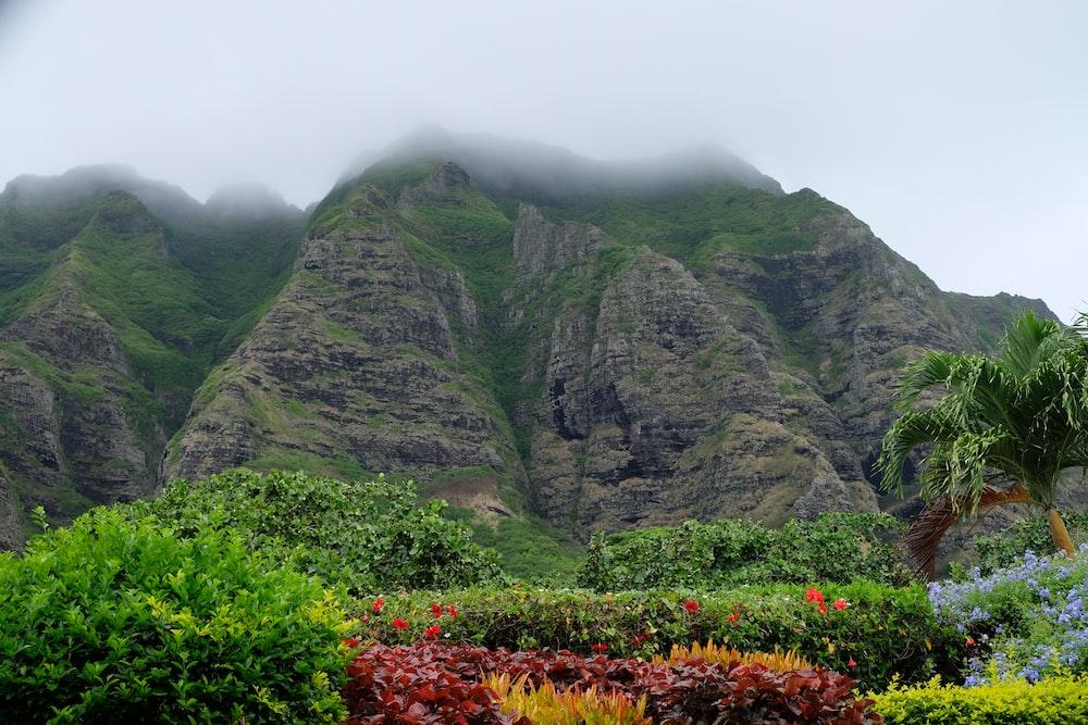 green mountain near flower field