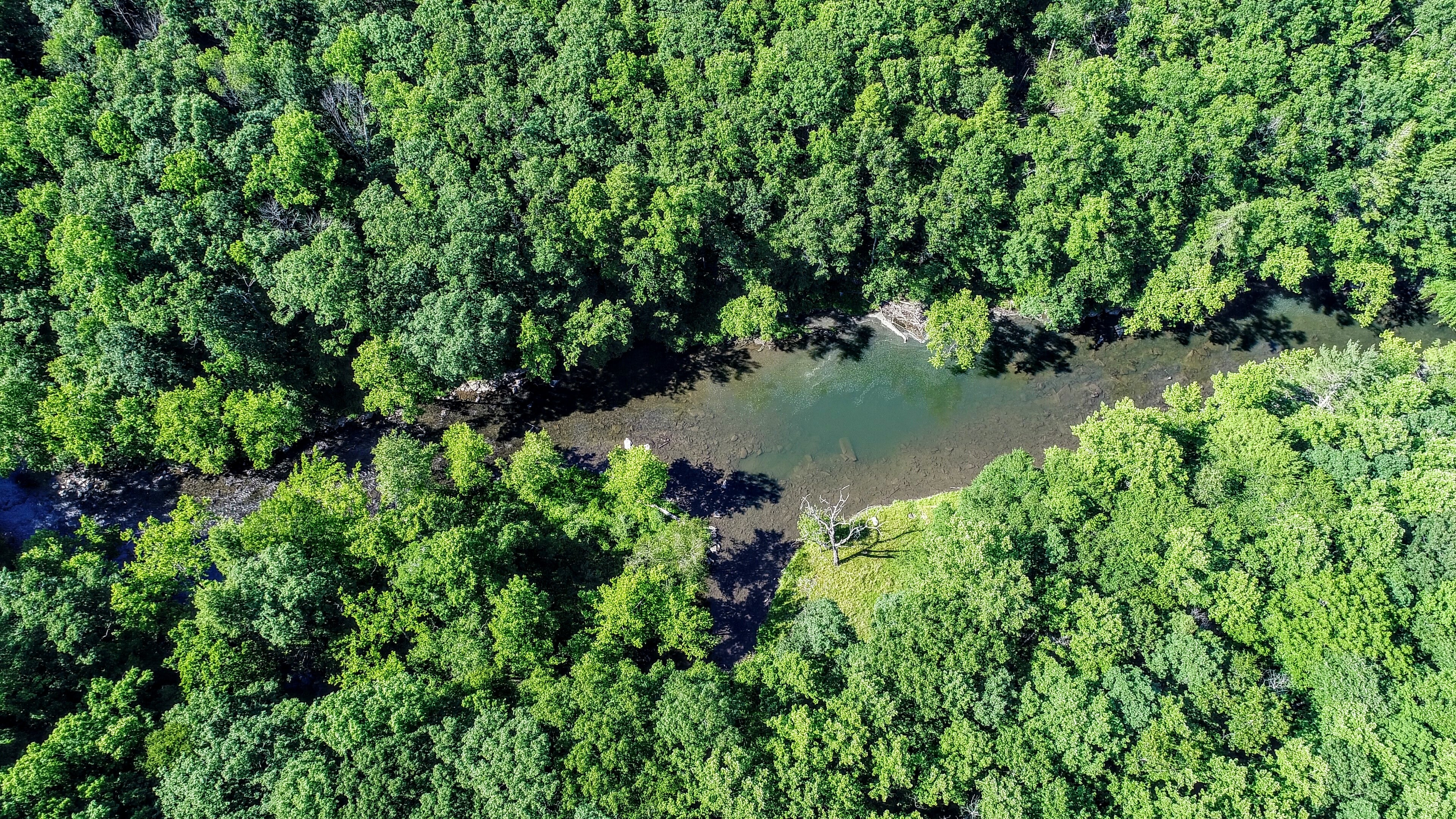 birds eye view photography of trees