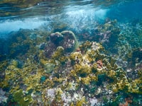 corals underwater photography