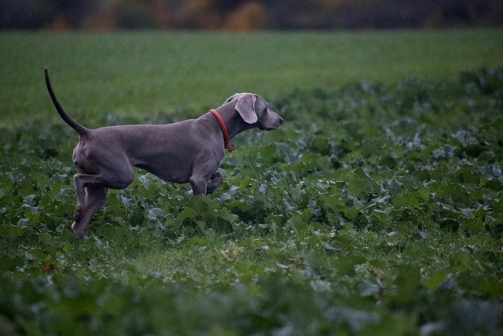 dog on grasses