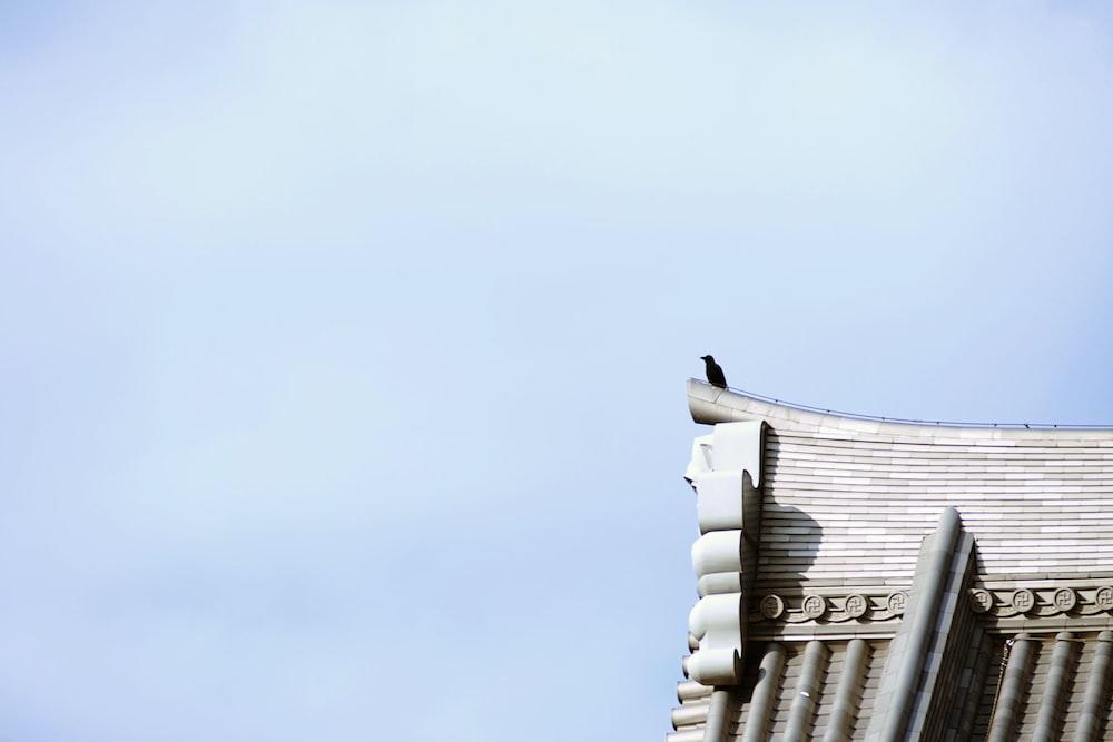 black bird standing on top of building