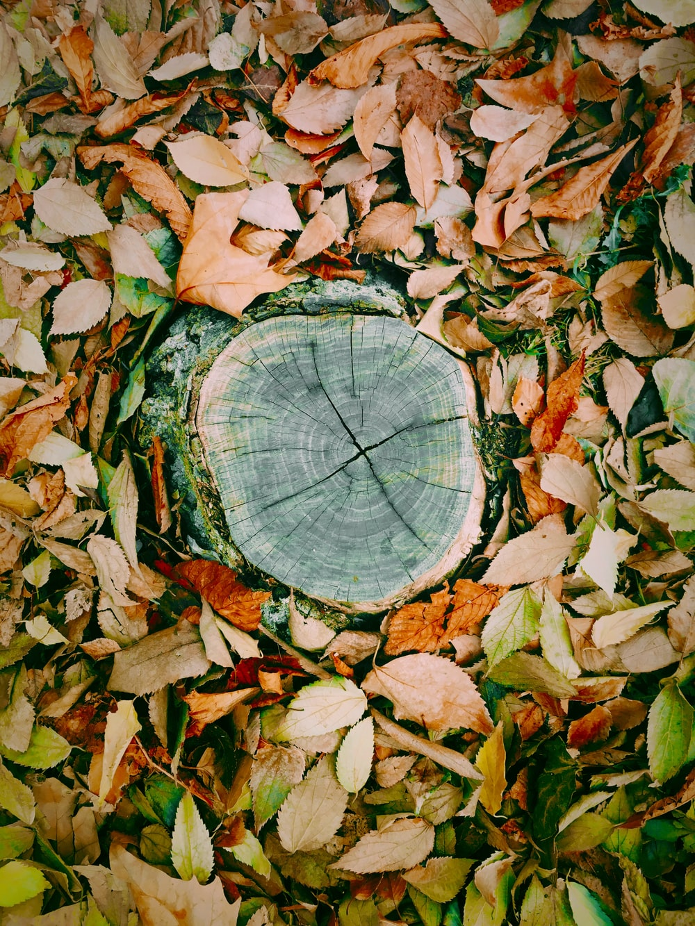 tree stump surrounded with leaves