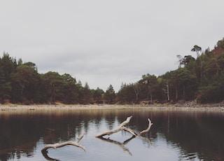 green pine and palm trees near sea