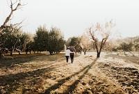 couple walking in between trees