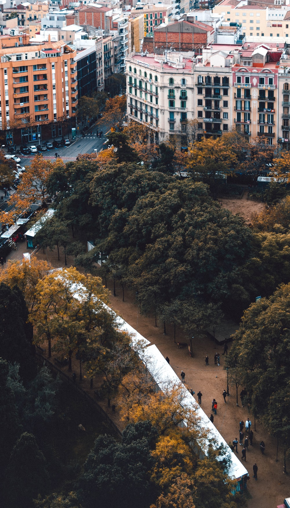 high angle photography of people walking between trees