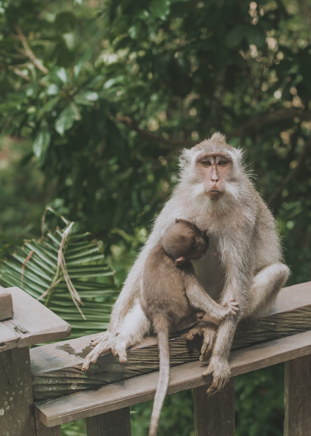 gray monkey with baby on rail