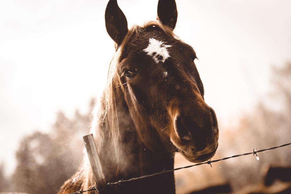 shallow focus photo of brown horse