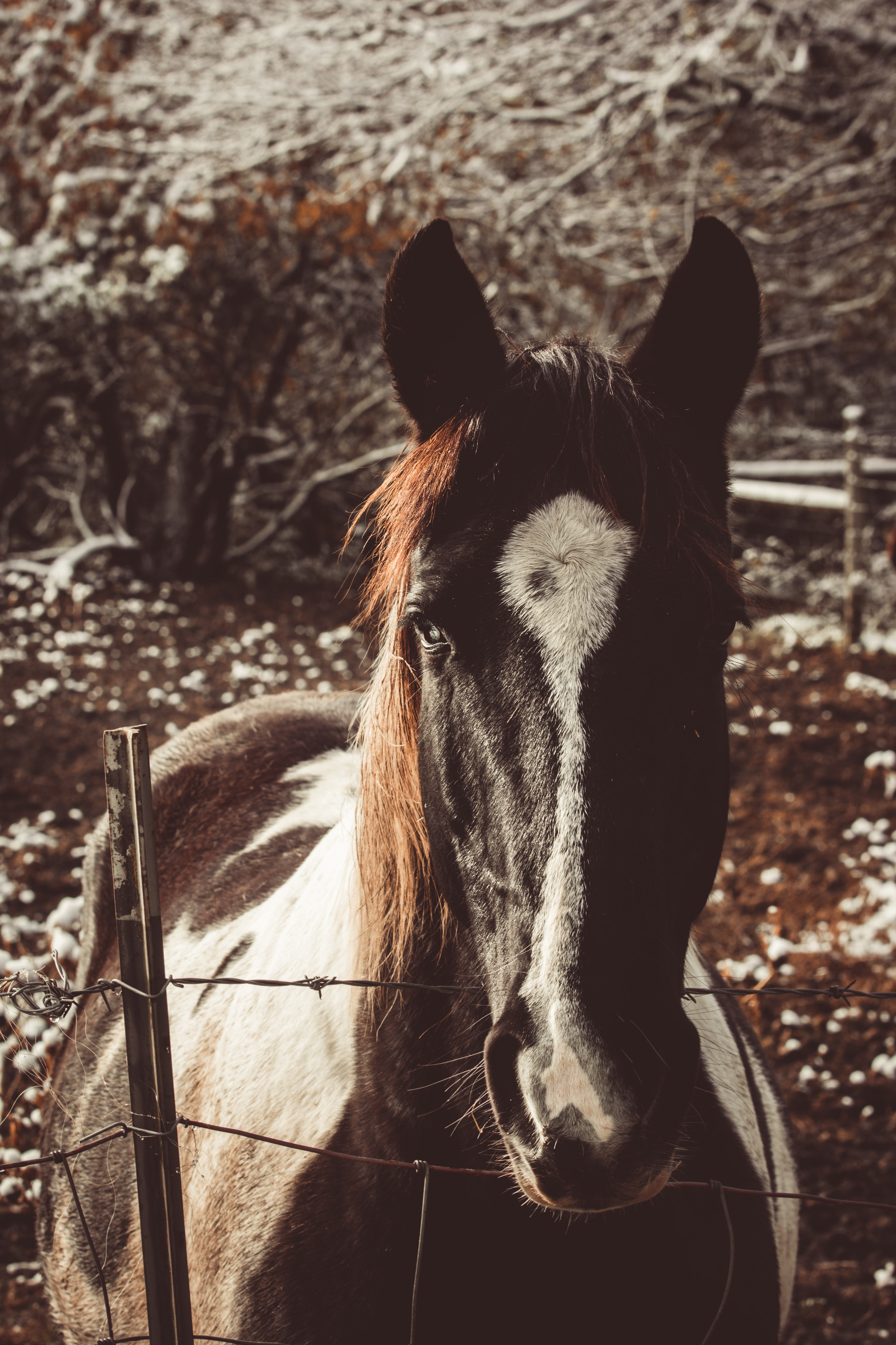 selective focus photography of black and white horse