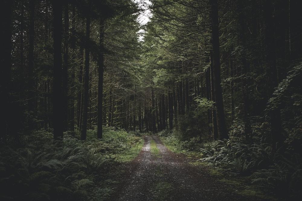 clear road way between trees